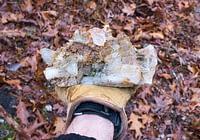 Arkansas Quartz Crystals