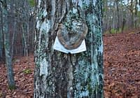 Fungus Covering Sign On Tree